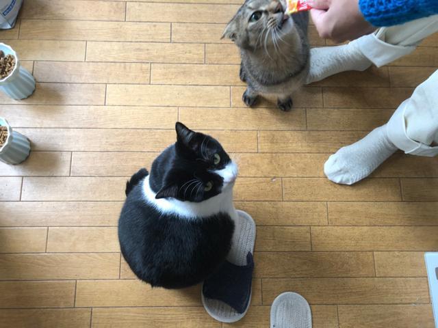 画像3: 猫の愛って……
