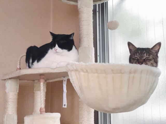 画像8: 猫の愛って……
