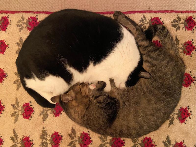 画像4: 猫の愛って……