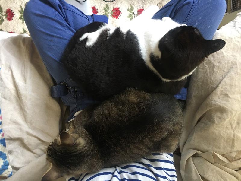 画像2: 猫の愛って……