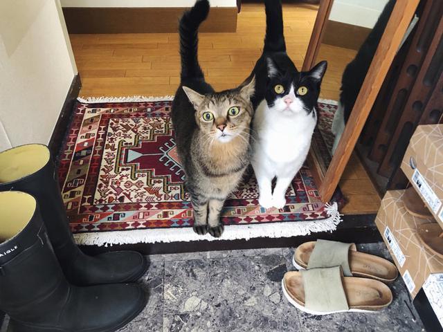 画像7: 猫の愛って……