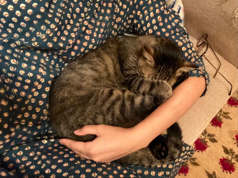 画像11: 猫の愛って……