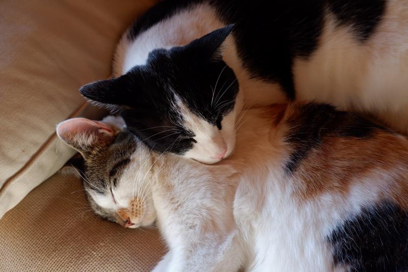 画像: 日なたでくつろぐ猫たち