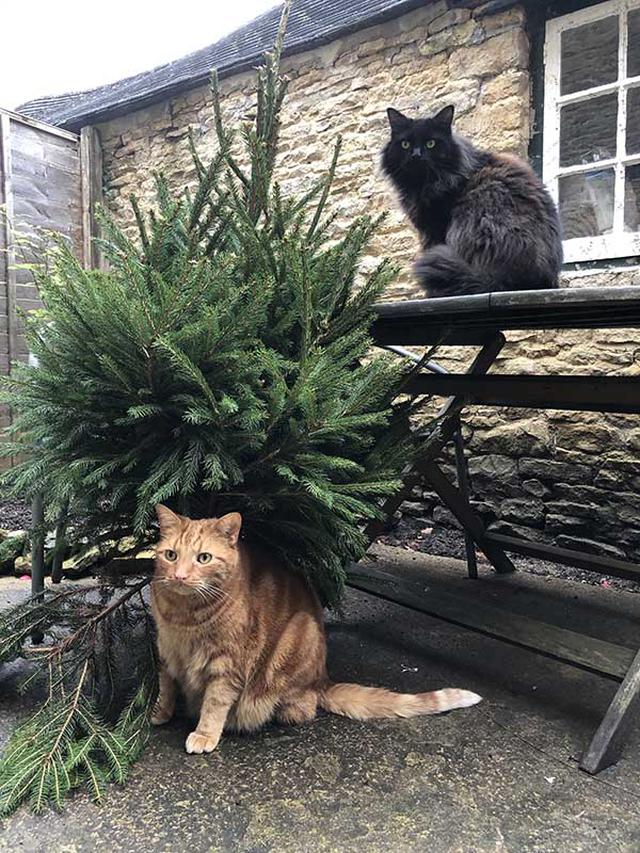 画像: 愛猫ディエゴとココも、配達されたもみの木が気になるよう