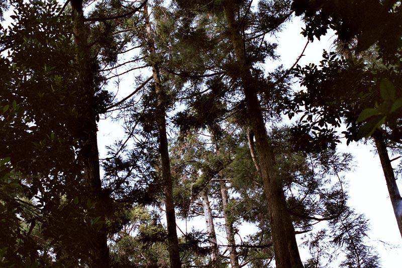 画像2: ブライダルフォトの聖地「黑森林(ヘイシィェンリン)」