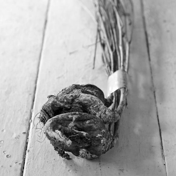 画像: イベントなどの際に展示する、福岡県の「芥屋(けや)かぶ」。実から種へ命が継がれることの象徴。