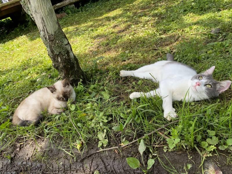 画像: ブラウンズフィールドで愛想振りまく猫たち。とっても人懐っこいです。