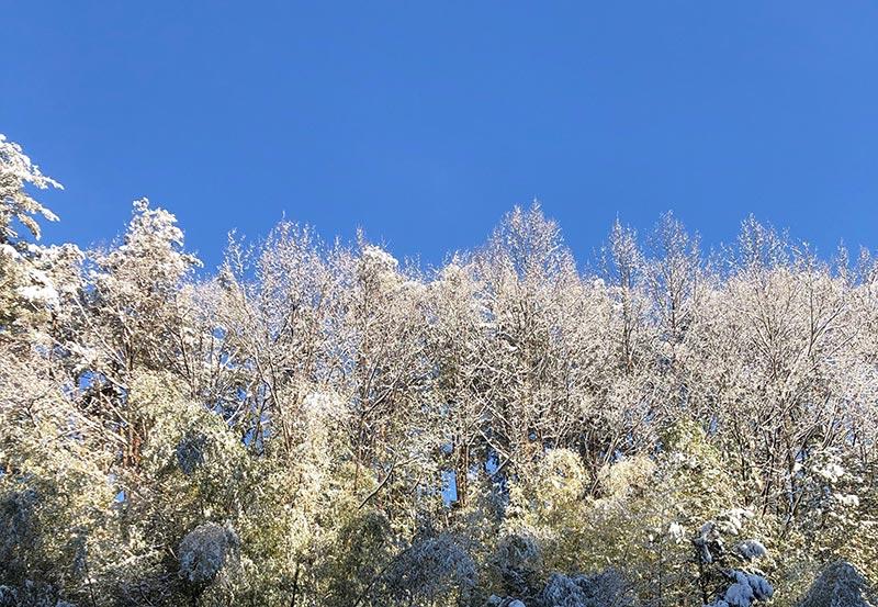 画像1: お正月飾りで余った稲わらを使い、楽しい草あそびを