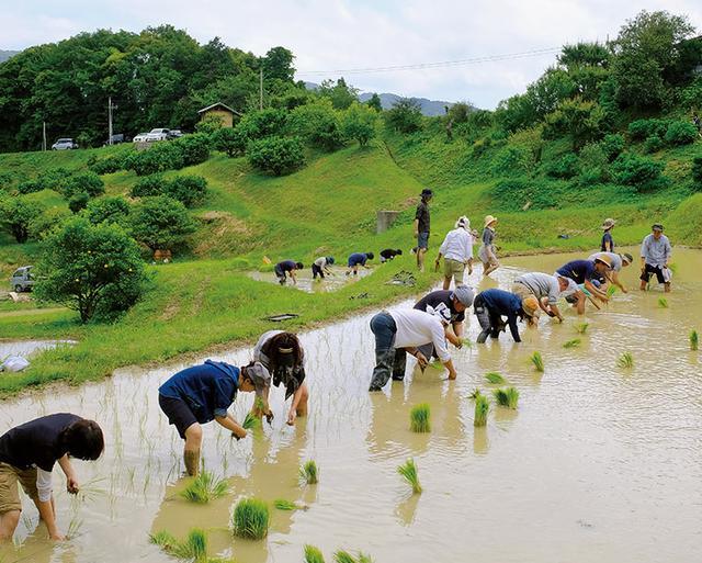 画像: 2014年からNPO法人とともに行っている里山保全活動「無印良品 鴨川里山トラスト」。天水棚田で無農薬栽培の米づくりを行っている