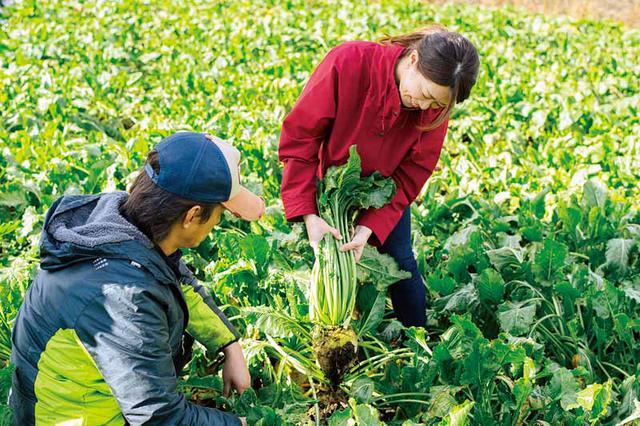 画像: 「意外と力はいらないんですね」。假屋さんの手ほどきを受け、吉田さん初めてのてん菜収穫