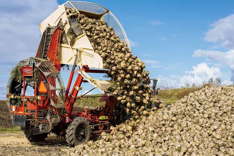 画像: 「ビートタッパー」で葉を刈り(上)、「ハーベスター」で根を収穫し、荷台がいっぱいになったら降ろす(下)。収穫期にはこれを日々、何往復も行う