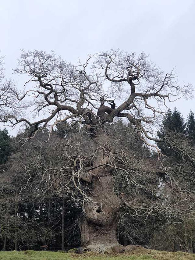 画像: 邸宅の庭には、この地域に昔からあるウィッチウッド森の一部も含まれ、立派な大木がたくさん