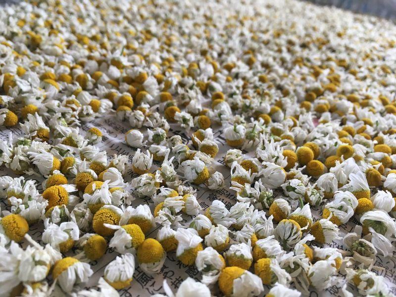 画像: カモミールの自然乾燥