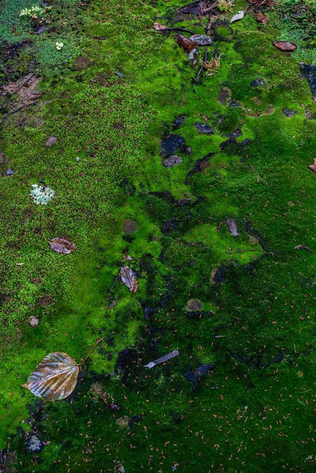 画像: 濃い緑色がホンモンジゴケ。ということは、緑が濃いあたりが銅ゾーンのようです