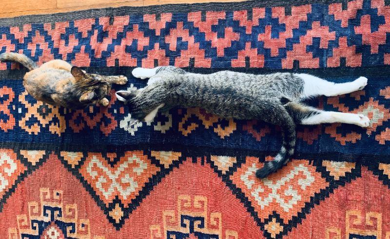 画像1: 我が家の猫は2匹