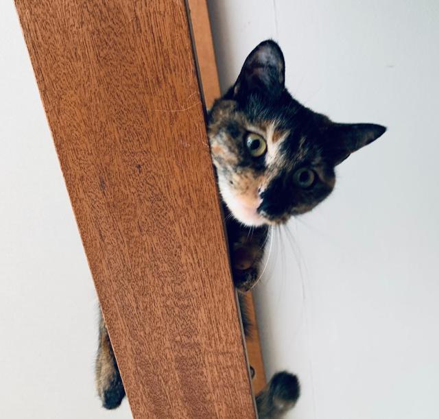 画像: 「我が家の猫は2匹」中里真理子|猫と暮らす