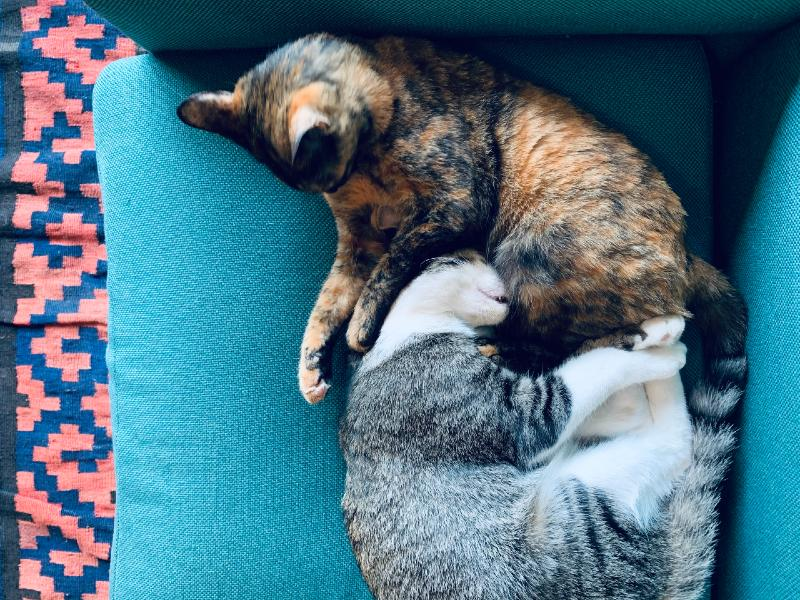 画像: 上のサビ猫がティブ、下のサバトラ猫がネト