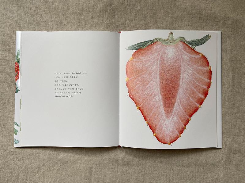 画像: いちごの断面図。とてもきれい。種が葉から養分をもらっていたことがよくわかります。