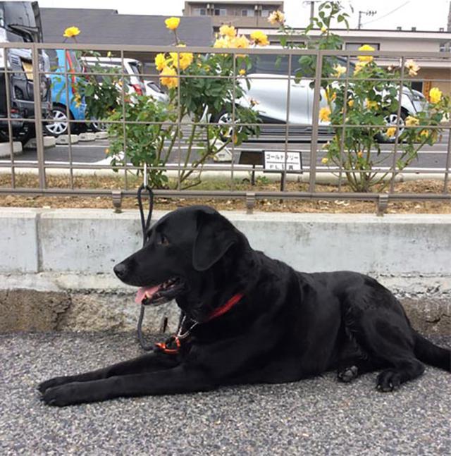 画像: 盲導犬として8年活躍した後に野田さんの家へ。この写真は、野田さん家族と一緒に暮らすようになってまもない頃