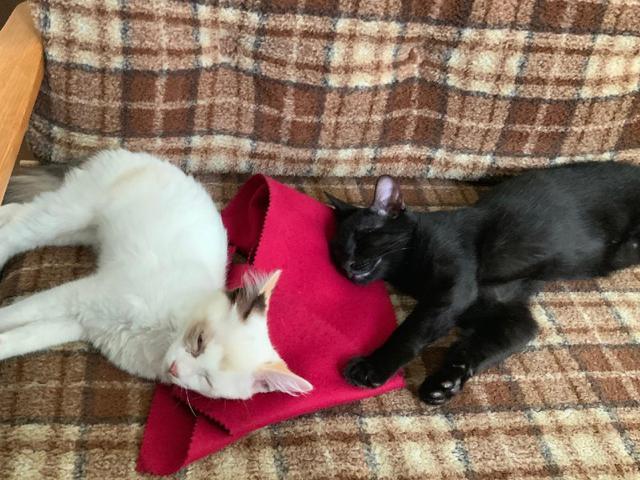 画像1: 猫ちゃんと暮らす