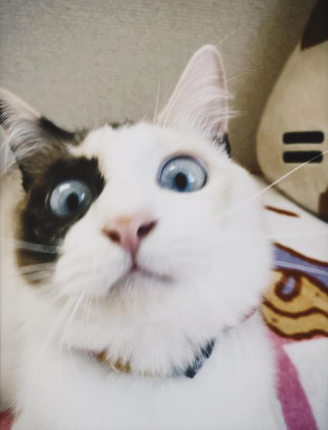 画像4: 猫ちゃんと暮らす