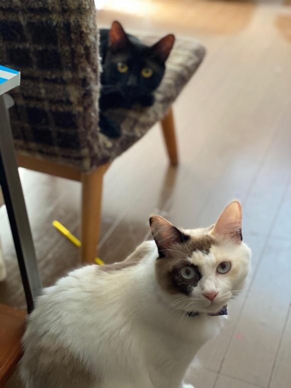 画像6: 猫ちゃんと暮らす