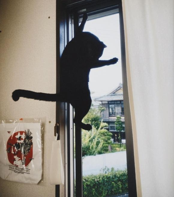 画像3: 猫ちゃんと暮らす