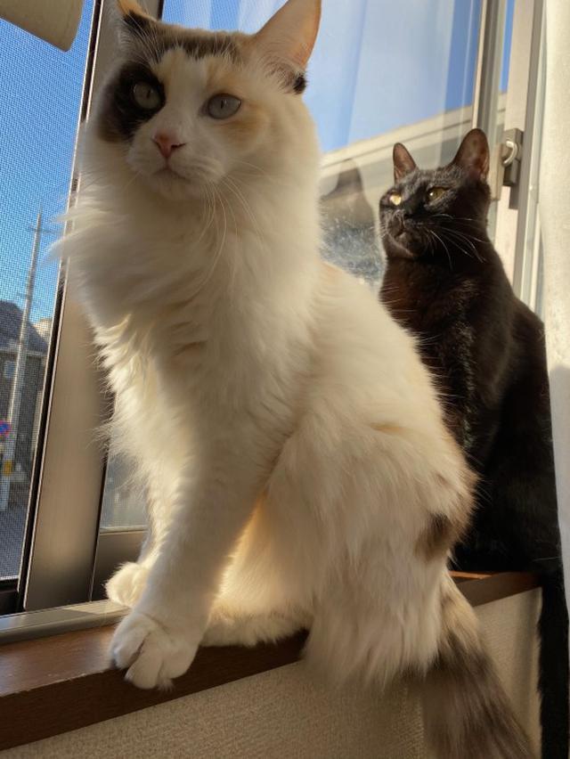 画像7: 猫ちゃんと暮らす