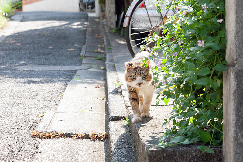 画像5: 猫たちと暮らした古い家の思い出