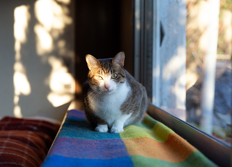 画像3: 猫たちと暮らした古い家の思い出