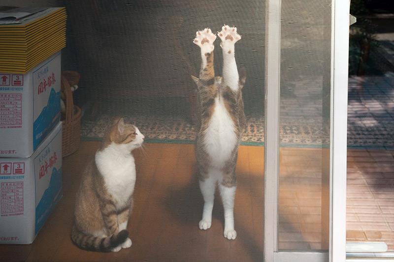 画像1: 猫たちと暮らした古い家の思い出