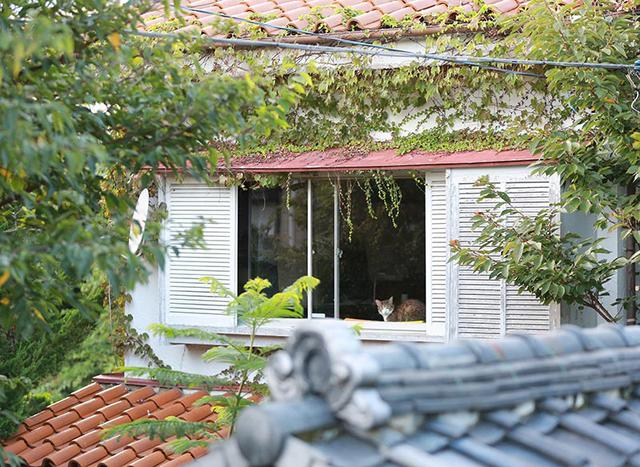画像4: 猫たちと暮らした古い家の思い出
