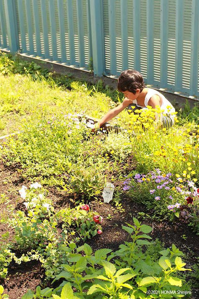 画像: 自宅の庭で花壇づくり。たくさんの虫があそびに来てくれるようにと、虫好きな息子と考えて、いろいろな花を植えました
