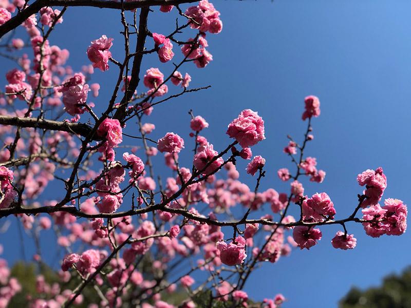 画像1: 春に花を愛でる