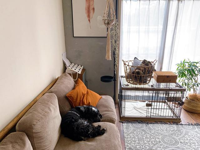 画像: 寝て食べて、また寝る。元保護犬ベルの平和な日常