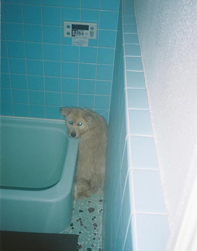 画像: 初めてのシャンプーで隙間に逃げ込むアビー