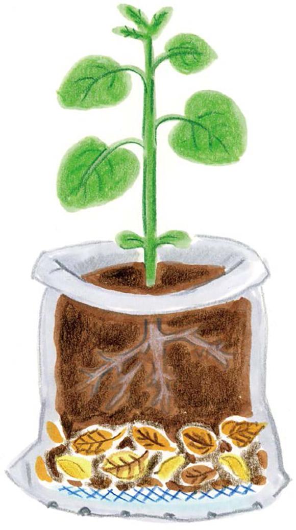 画像: 「空気の層」をつくって、根の生育を良好にする