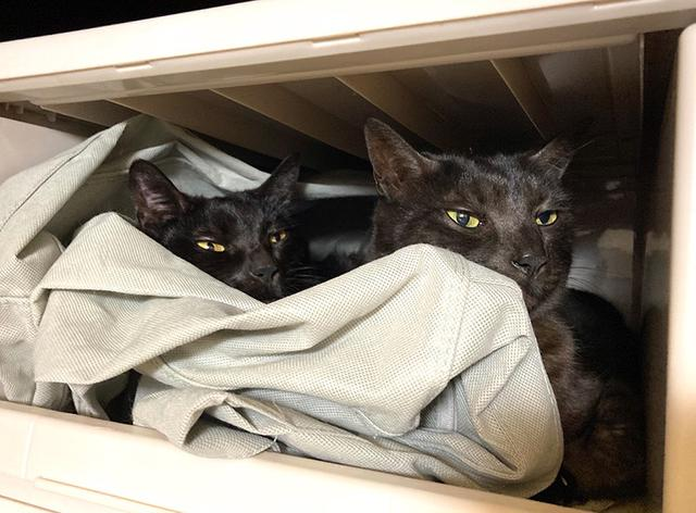 画像: 姉妹猫の煤(スス)と墨(スミ)。引っ越し直後、仮の寝床で2匹くっついていた