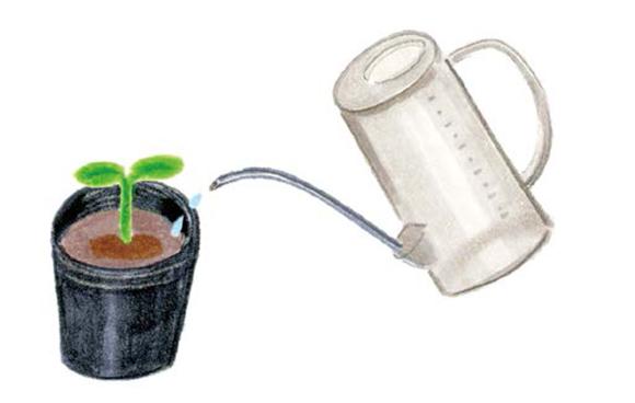 画像1: 種まき・植えつけ