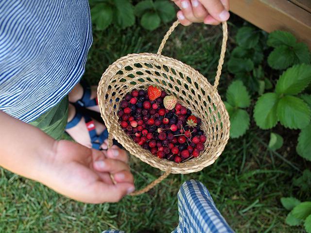 画像: 庭のジューンベリーやイチゴ