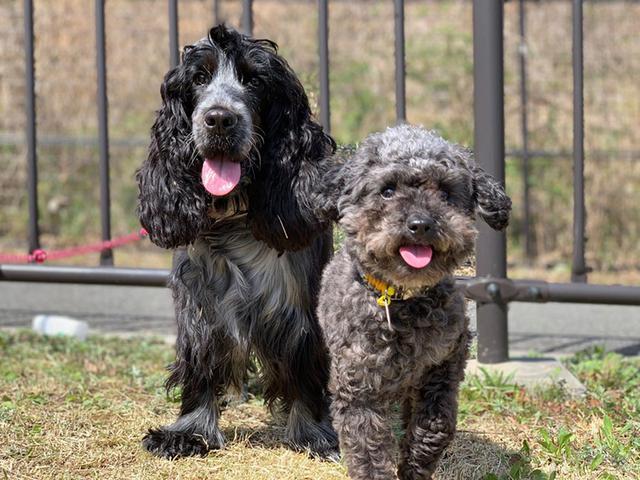 画像1: 2匹の「元保護犬」の共通点