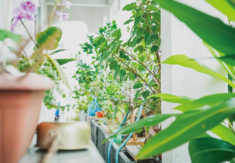 画像: ベランダには土を感じられるよう、草花がたくさん植えられ、緑が美しい