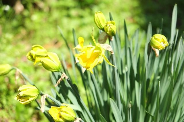 画像: 庭には次々季節の花が