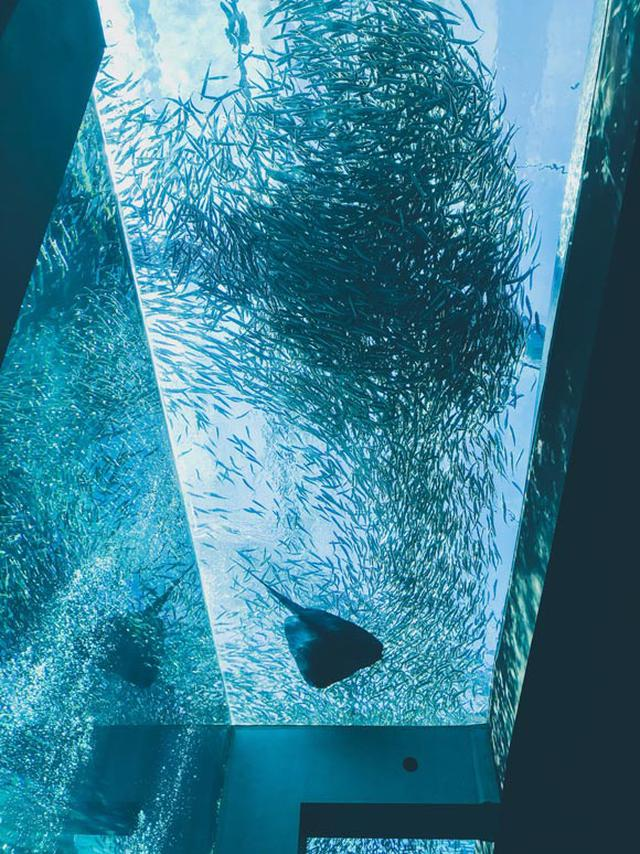 画像2: 3月に産まれたゴマフアザラシの赤ちゃん「アクアマリンふくしま」