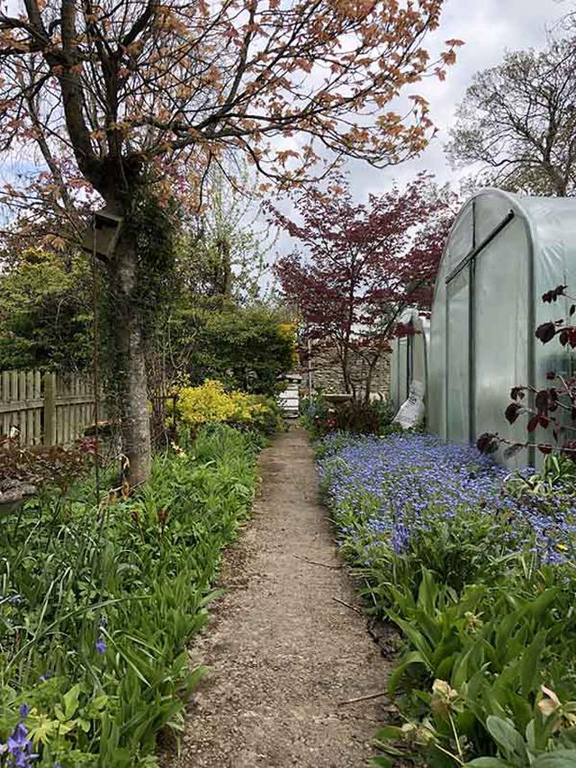 画像: デイビスさんのお店のビニールハウス。裏の小道も花が咲いて素敵です