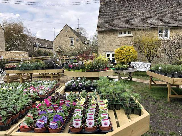 画像: 見事な植木鉢が並ぶデイビスさんのお店