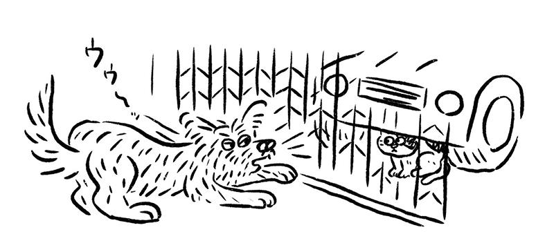 画像: 猫、鳥、タヌキにはなぜかいつも勝気