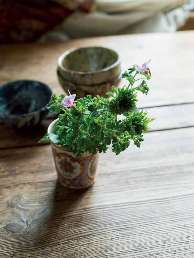 画像: 巻頭特集 花生師 岡本典子さん 涼しげな夏の花あしらい