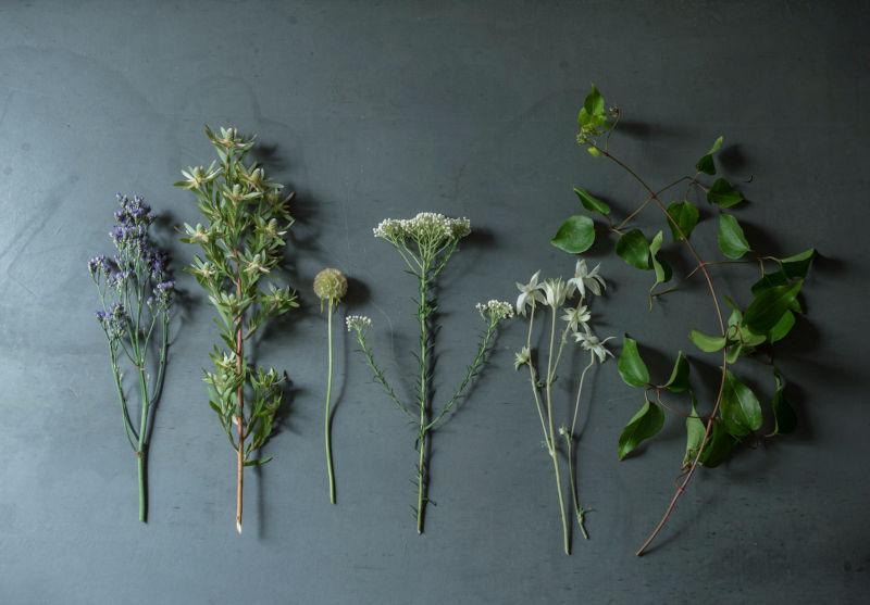 画像: 左から、リモニウム、リューカデンドロン、スカビオサ ステルンクーゲル、ライスフラワー、フランネルフラワー、センニンソウ