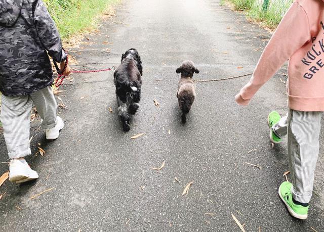 画像1: ときには仲良し犬バディとのお散歩も